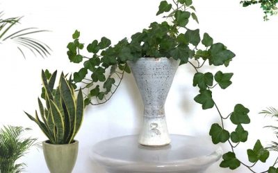 How to Arrange and Decorate With Indoor Plants Stylishly