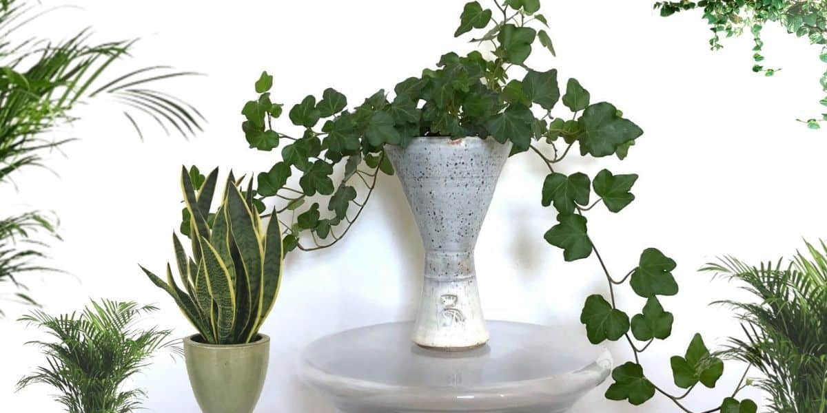 How to Arrange Plants Stylishly