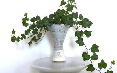 How to Arrange Indoor Plants: Decorating with Plants