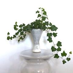 How to Arrange Indoor Plants: Decorating with Plants    - Du Your Home
