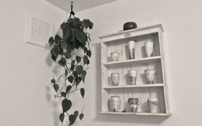 Best Indoor Plants and How to Create that Scandi Boho Decor Style