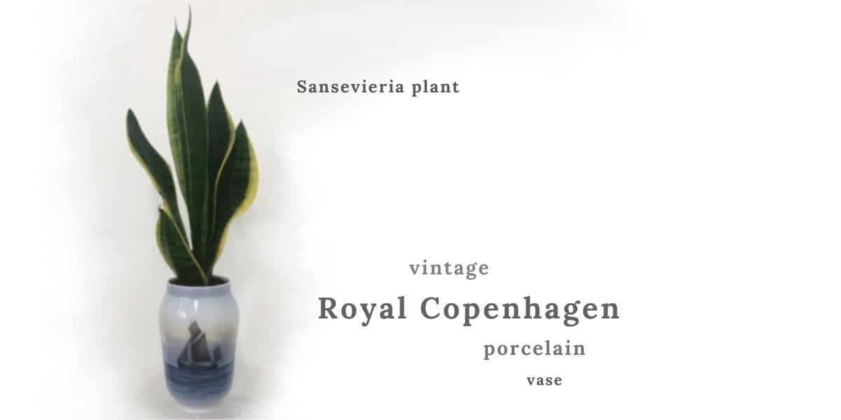 plants for scandi boho interior