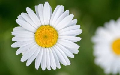 Indoor Garden Ideas – Best Flowers for Scandi Style Living