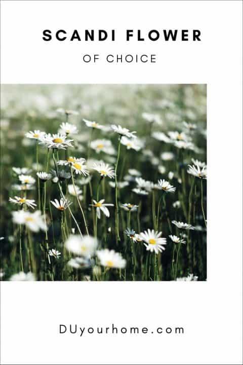 Daisy field indoor gardens ideas