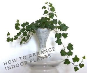 How to arrange indoor plants in ceramic vase