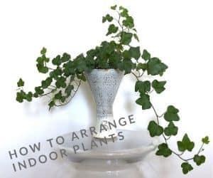 How to arrange indoor plants in ceramic vase