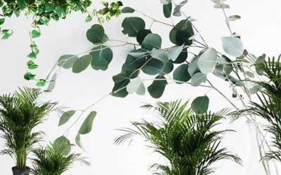 Popular Houseplants and How to Create an Urban Jungle