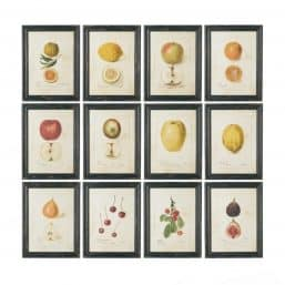 12 prints of fruits on antiqued paper